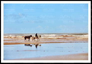 23 Chevaux sur la plage de Berck
