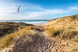 Les dunes de Berck-a